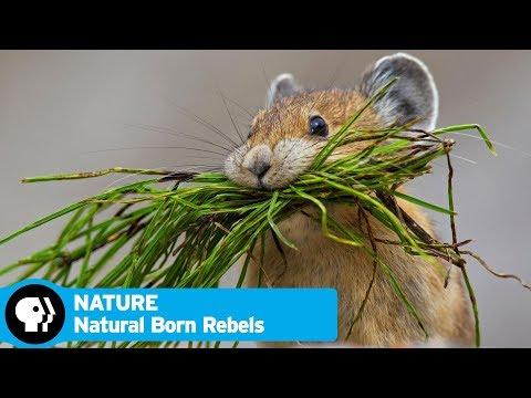 NATURE | Natural Born Rebels, Episode 1: