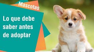 Lo que debe saber antes de adoptar un cachorro | Mascotas