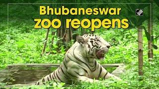 Bhubaneswar's Nandankanan Zoological Park reopens - INDIATV