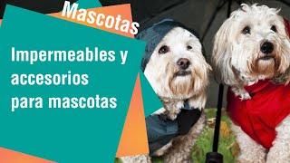 Accesorios para la seguridad de su mascota   Mascotas