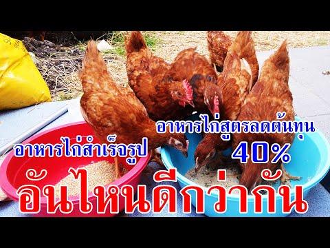 สูตรอาหารไก่ไข่-ลดต้นทุน-40%