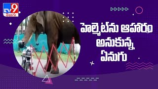 Viral Video: Elephant Eats Helmet Hanging from a Parked Bike - TV9 - TV9