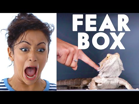 connectYoutube - Liza Koshy Touches a Bearded Dragon, Chinchilla & Other Weird Stuff in the Fear Box   Vanity Fair