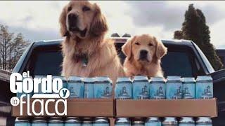 Estos caninos son las estrellas de una cervecería en Nueva York y tienes que ver por qué   GYF