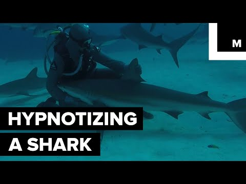 Try Not to Get Hypnotized by This 'shark Whisperer' and His Calming Powers