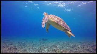 'Animales en Libertad', un homenaje a la vida marina