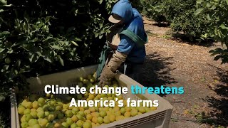 Climate change leaves devastation to crops, farming's future
