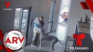 Ladrón intentaba robar en una casa y recibe una dura lección por un perro   Al Rojo Vivo   Telemundo