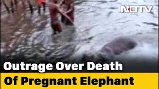 """""""3 Suspects,"""" Says Kerala Chief Minister On Killing Of Pregnant Elephant - NDTV"""