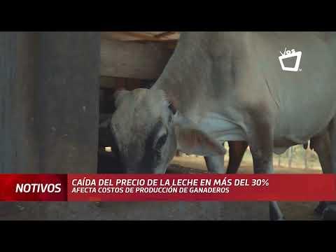 Caída del precio de la leche afecta los costos de los ganaderos