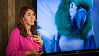 Laurel Braitman: Depressed dogs, cats with OCD — what animal madness means for us humans