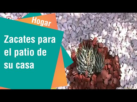 Zacates decorativos para el patio de su casa   Hogar