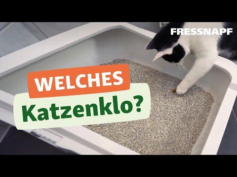 4 Tipps zum Katzenklo - Alles zur Katzentoilette und zu Katzenstreu