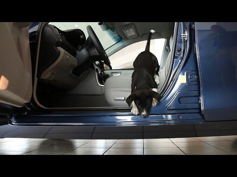 Toyota Puppies