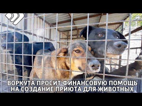 Воркута просит у республики финансовую помощь на создание приюта для животных