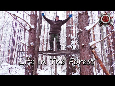 How The Siberian Natives Make A Platform For Storage And Sleeping In The Forest.