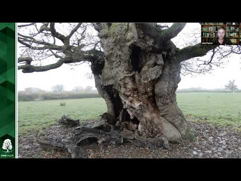 The history and importance of trees in Stonehouse