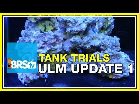 ULM Tank Trials Ep-16: ULM Update-what we've learned so far | BRStv