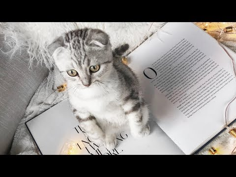 MEETING THE NEW BABY KITTEN *Emotional*