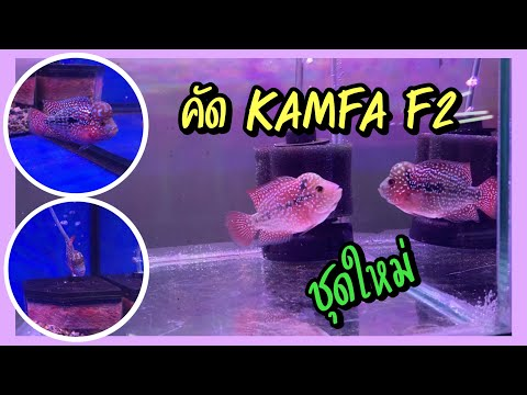 Zing's-Day-I-คัดปลา-Kamfa-f2-ช