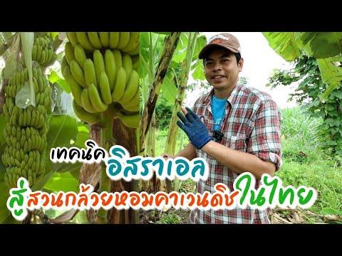 EP174การดูแลสวนกล้วย-มีคนเอาเท