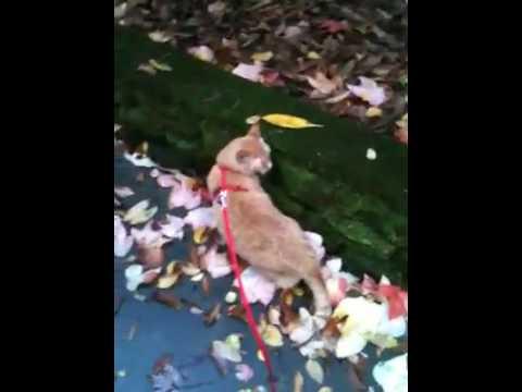 Adopt Horatio on Adopt-a-Pet.com