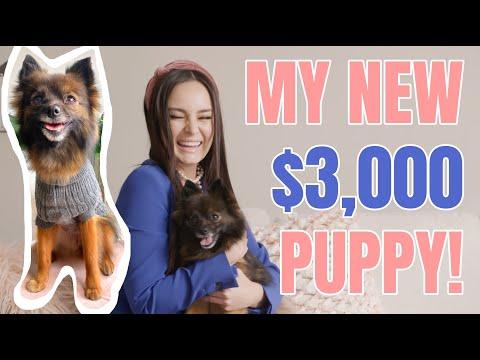 I GOT A DOG! Claudia Morello: YouTube Famous S2 E1