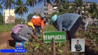 Federadas de Cuba participan en trabajo voluntario en La Habana