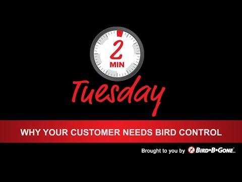 Why your Customer needs Bird Control