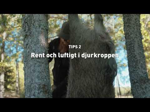 2. Rent och luftigt i djurkroppen
