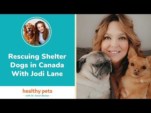 Rescuing Shelter Dogs in Canada With Jodi Lane