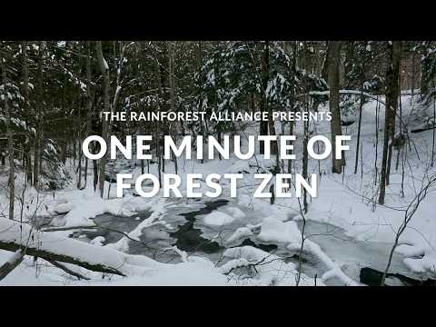 One Minute of Forest Zen