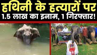 Pregnant Elephant की हत्या में 1 गिरफ्तार, बाकी आरोपियों पर 1.5 लाख का इनाम - ITVNEWSINDIA