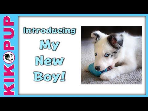 Introducing my new boy!  - Puppy tutorials coming soon!