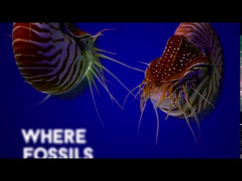 Unbelievable Lives Here: Chambered Nautilus
