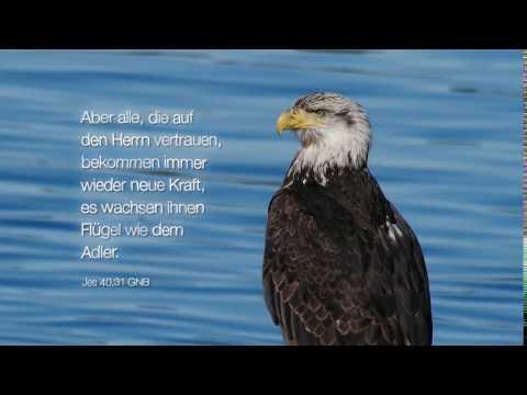 Bibelwort Jesaja 40,31