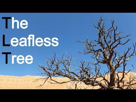 Hope for the Backslider - Charles Spurgeon Sermon