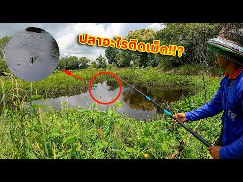 ปลาอะไรติดเบ็ด!!-ถึงกับต้องลุ้