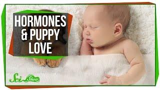 Hormones and Puppy Love