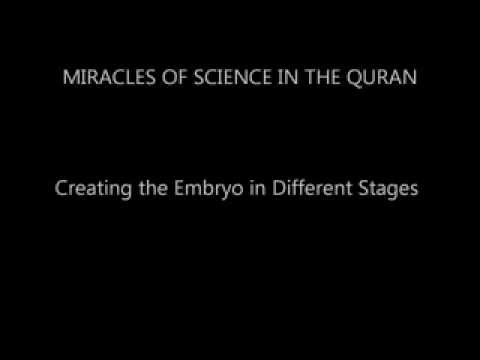 Creating the Embryo in Different Stages. Miracles of science in the Quran.