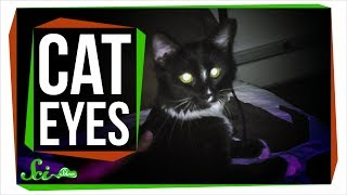 Why Do Cat Eyes Glow in the Dark?