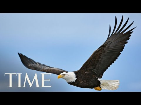 Republicans Plan To Roll Back Parts Of The Landmark Endangered Species Act   TIME