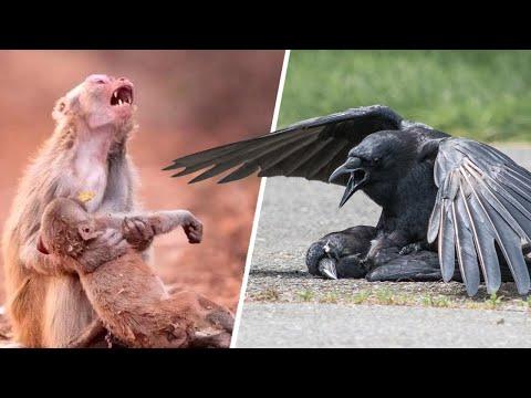 Как Животные Прощаются с Умершими