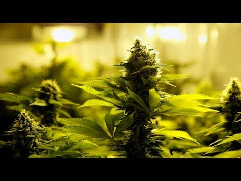 Pot business booming