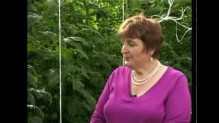 Сад и огород. Помидоры, томаты.