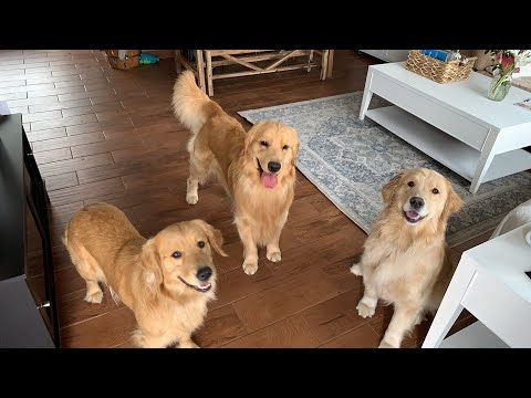LIVE Surprised My Dog with Two Ladies