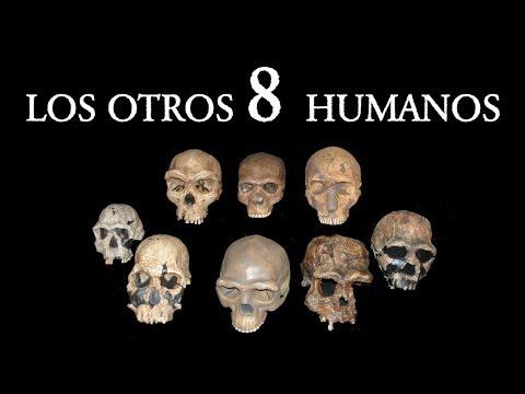 ¿Cuántas Especies de Humanos Existieron?