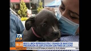 Mixco limita reproducción y crianza de mascotas