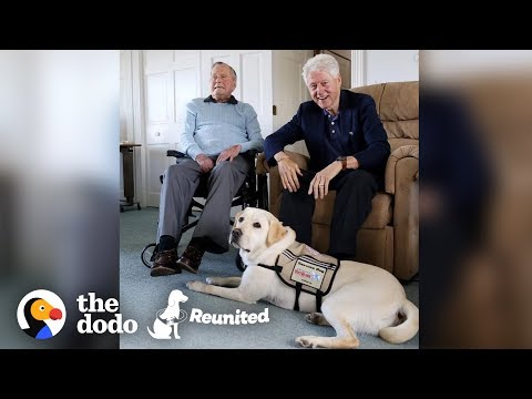 Former President's Service Dog Is SO Excited To See His Mom   The Dodo Reunited