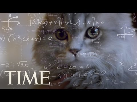 Cats Are Just As Smart As Dogs, Study Suggests   TIME